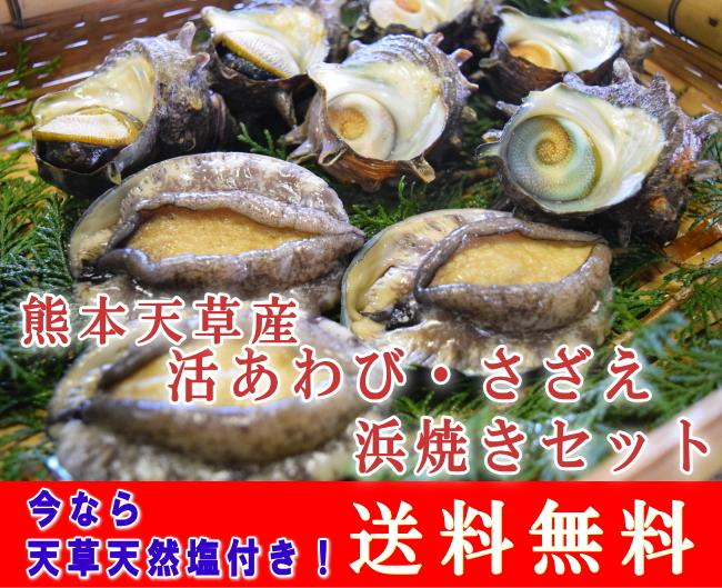 【送料無料】天草産活あわび・さざえ浜焼きセット/天草天然塩付き/刺身OK/のし対応
