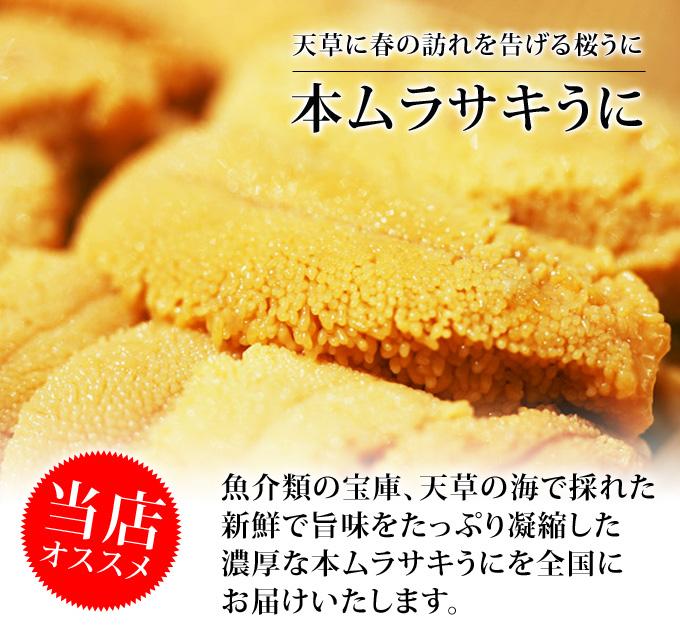 【春季限定】天草殻出し生うに<ムラサキウニ>50g【無塩・無添加】うに/瓶詰め/ギフト/プチギフト/のし対応