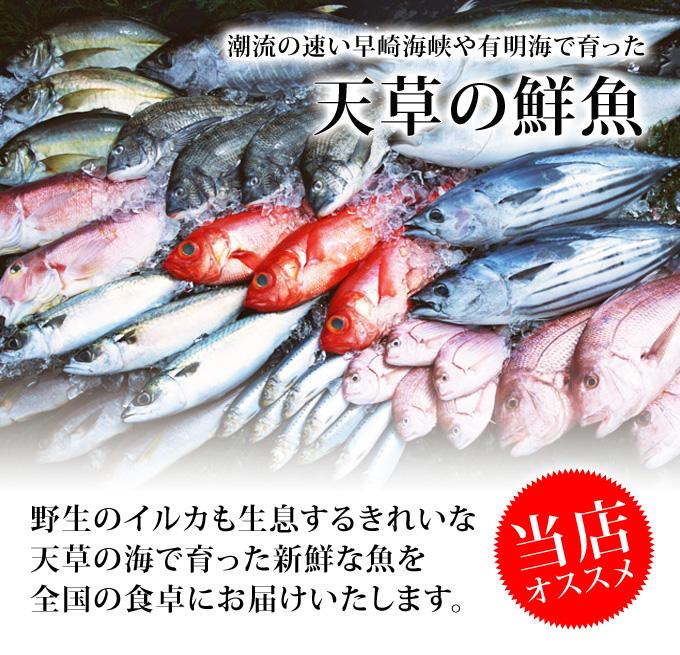 【送料無料】天草天然魚介類詰合せ/産地直送/ギフト/のし対応