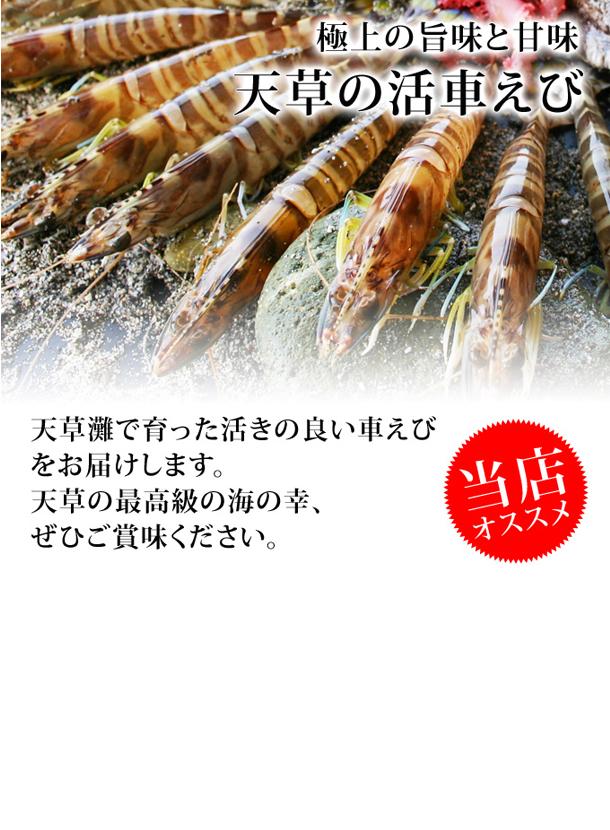 【送料無料】極上!天草活車えび/650g